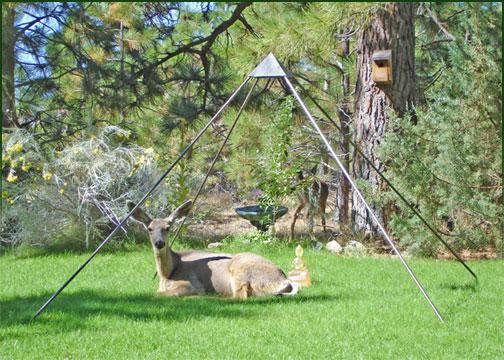 What Can I Feed Deer In My Backyard deer in the yard